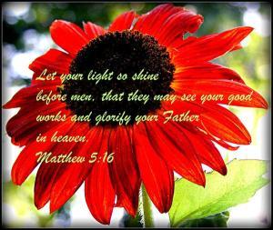 let-your-light-so-shine-robert-babler